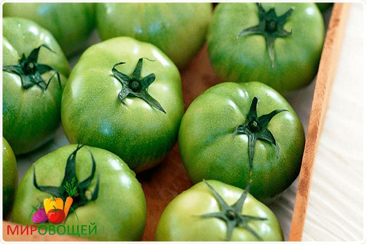 томаты зелёные